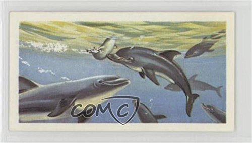 Dolphins (Trading Card) 1974 Brooke Bond The Sea: Our Other World - Tea [Base] #26