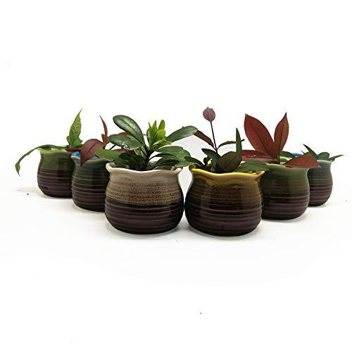 Succulent Pots 6 Pack – Mini Ceramic Pots 2.5 Inch, Small Flower, Planter, Bonsai, Cactus Pot with a Hole – Perfect Decorative Gift Idea ()