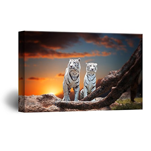 wall26 Canvas Wall Art - Two White Tigers in The Wild at Sunset Time - Giclee Print Gallery Wrap Modern Home Decor Ready to Hang - 24x36 inches -