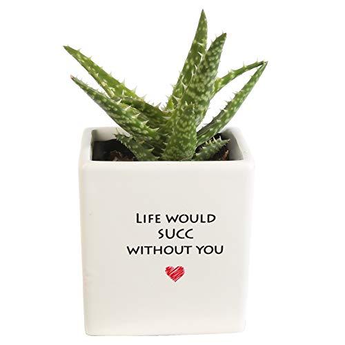Costa Farms Live Mini Aloe Plant, Growers Choice, in Life Heart White Ceramic