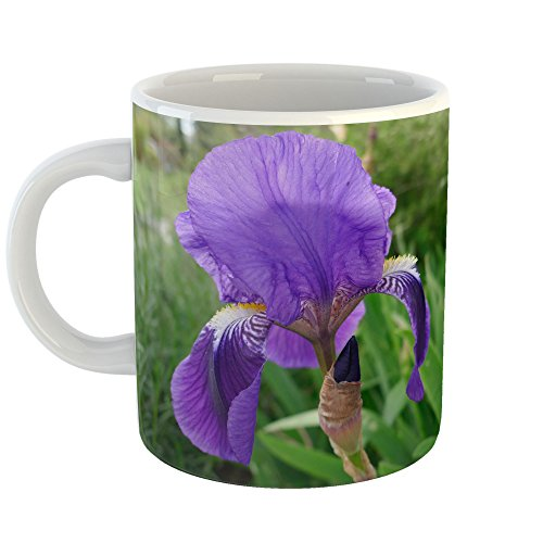 Westlake Art - Iris Flower - 11oz Coffee Cup Mug - Modern Picture Photography Artwork Home Office Birthday Gift - 11 Ounce (0695-94D39)