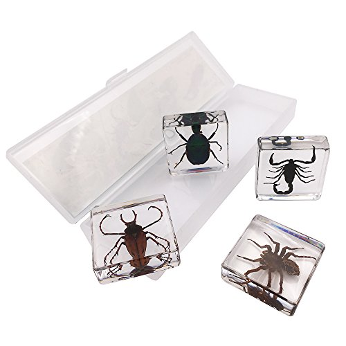 WhizKidsLab 4PCS Real Bugs Insect Arachnid Resin Specimen STEM Set + Magnifier + Fun Fact Sheet Poster