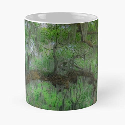- Branches Hanging Moss Oak Tree New Orleans Ceramic Coffee Mugs, Funny Gift