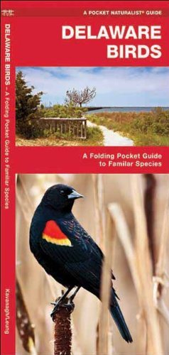 By James Kavanagh Delaware Birds: A Folding Pocket Guide to Familiar Species (Pocket Naturalist Guide Series) (1st First Edition) [Pamphlet] pdf epub