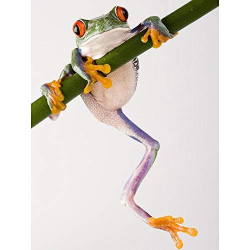 Wee Blue Coo Tree Frog Green Climbing Unframed Wall Art Print Poster Home Decor Premium