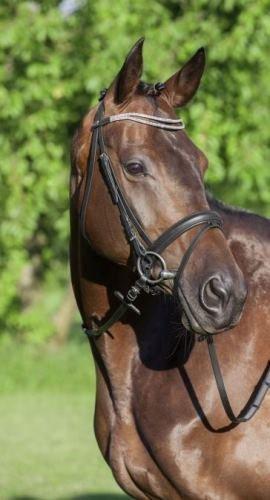 USG Juno Crank Flash Horse Bridle x Size  Full Black