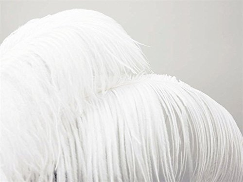 12 Ostrich Plume Feathers - 24 Inch-26 Inch White