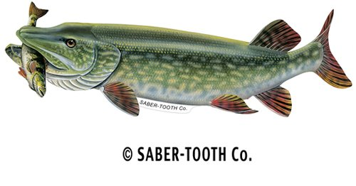 Sale!! Saber-Tooth Co Northern Pike with Perch Fish Decal Sticker ~ Fishing & Wildlife Series