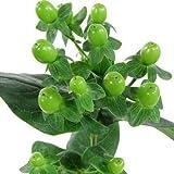 Fresh Cut Green Hypericum 100 Stems -