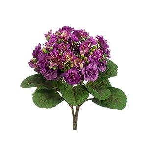 """12"""" African Violet Bush Violet (pack of 12) 26"""