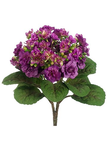 12-African-Violet-Bush-Violet-pack-of-12