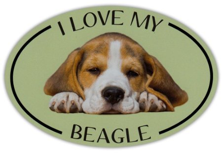 Oval Dog Breed Picture Car Sticker - I - Beagle Sticker For Car