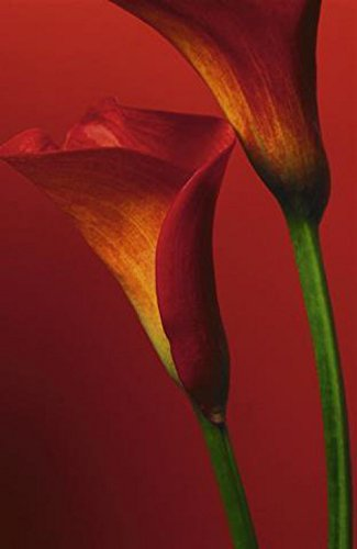 Flowers Poster Photo Wallpaper - Red Calla Lilies 4-Parts (100 x 72 inches) by 1art1