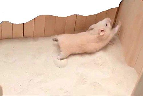 Western Era Sand Bath for Hamster, Gerbill (200grm) (Strawberry) (B081SWZ1GB) Amazon Price History, Amazon Price Tracker