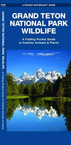 Grand Teton National Park Wildlife: A Folding Pocket Guide to Familiar Plants & Animals (A Pocket Naturalist Guide)