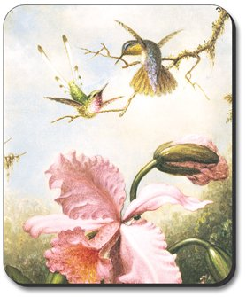 heade-orchids-hummingbirds-mouse-pad-by-art-plates