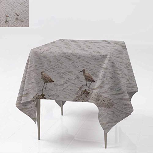AFGG Waterproof Table Cover,Marbled Godwit shorebird Limosa fedoa,Party Decorations Table Cover Cloth,60x60 Inch ()