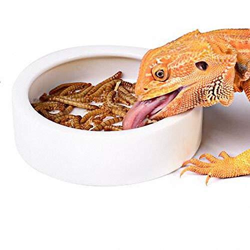 Worm Dish Mini Reptile Feed Feeder Food or Water Bowl Tray Ceramics Made (Large) - Ceramic Mini Water