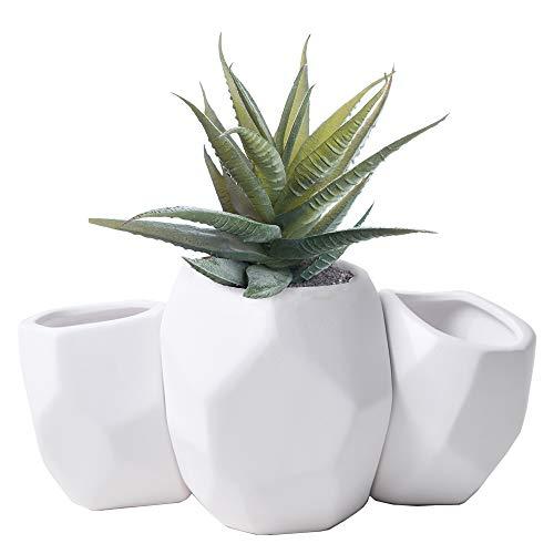 (Succulent Pots Ceramic Cactus Planters - 3 Pack White Flower Container 5.5