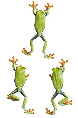 - Posterazzi Three Red Eyed Tree Frogs Climbing Poster Print (11 x 17)