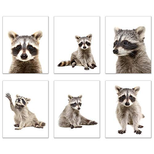 [해외]Minimalist Raccoon Prints - Set of 6 (8x10) Unique Adorable Trash Panda Poses and Angles Nursery Photography Wall Art Decor / Minimalist Raccoon Prints - Set of 6 (8x10) Unique Adorable Trash Panda Poses and Angles Nursery Photogra...