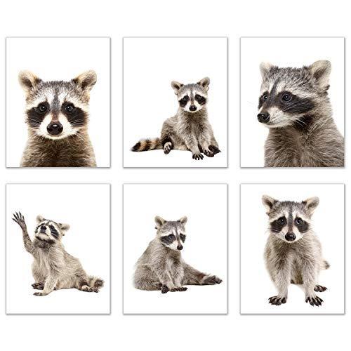 [해외]Minimalist Raccoon Prints - Set of 6 (8x10) Unique Adorable Trash Panda Poses and Angles Nursery Photography Wall Art Decor / Minimalist Raccoon Prints - Set of 6 (8x10) Unique Adorable Trash Panda Poses and Angles Nursery Photogra...