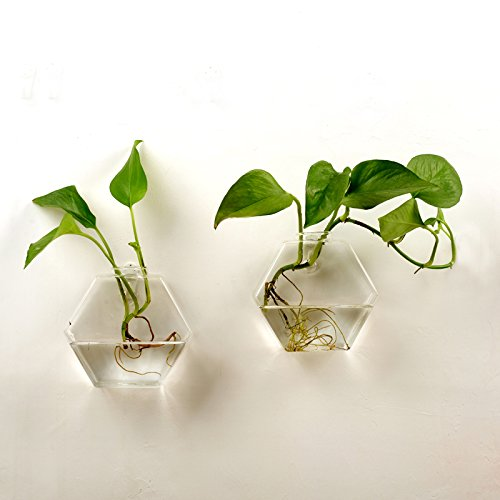 AWEVILIA Wall Hanging Plants Planter Terrariums Creative Fashion Glass Hexagon Shape Vase Home Decor Wall Plants Set of Two by AWEVILIA