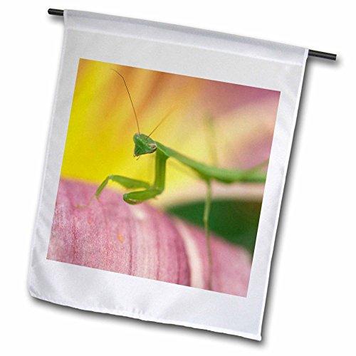 3drose-fl-84194-1-praying-mantis-insect-in-garden-pennsylvania-us-na02-rkl0000-raymond-klass-garden-
