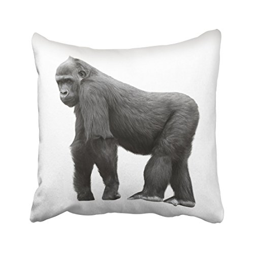Emvency Black Monkey Silverback Gorilla Standing on Lookout White Silver Animal Mountain Zoo Hairy King Kong Face Throw Pillow Cover Covers 16x16 Inch Decorative Pillowcase Cases Case Two Side ()