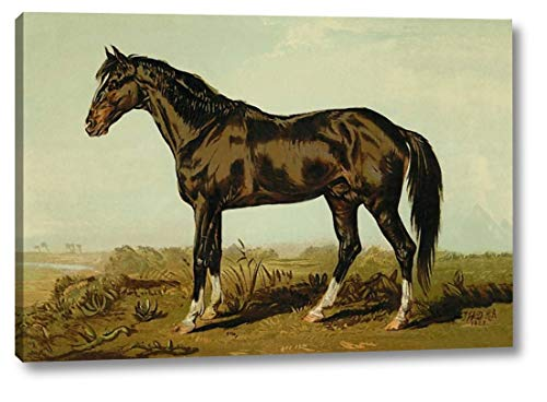 Dongola Horse, 1900 by Samuel Sidney - 13