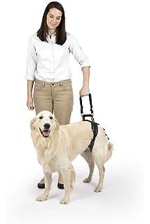 Amazon com : Walkin' Rear No-Knuckling Training Sock Helps Dogs Pick