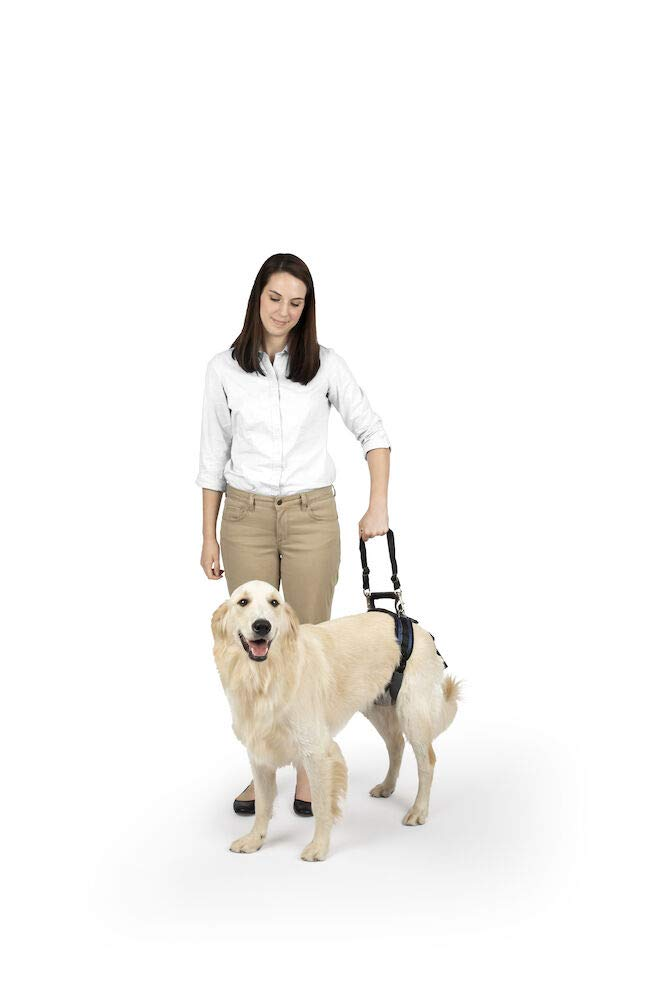 PetSafe CareLift Rear Support Harness - Lifting Aid with Handle and Shoulder Strap - Great for Pet Mobility and Older Dogs - Comfortable, Breathable Material - Easy to Adjust