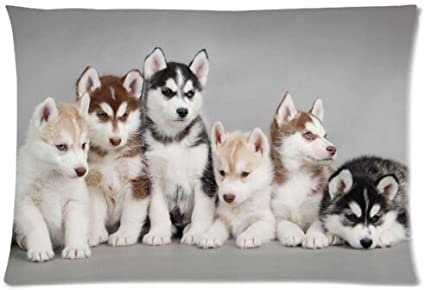 Amazon Com Funny Siberian Husky Puppies Dogs Pets Pillowcase