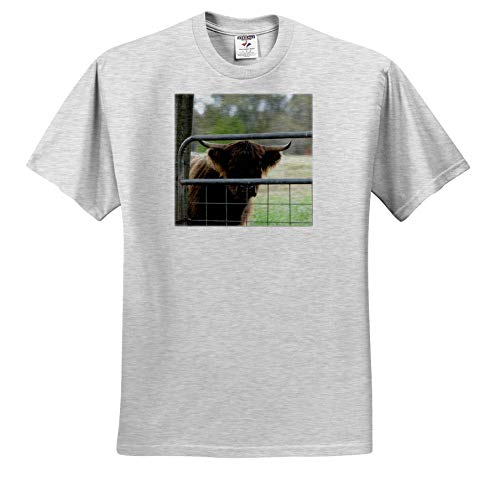 - Stamp City - Animal - Photograph of an Adorable Highland Cow with a Leaf Stuck in its Nose. - T-Shirts - Toddler Birch-Gray-T-Shirt (3T) (ts_302439_32)