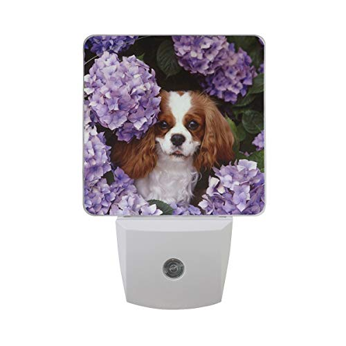 OuLian Night Light Cavalier King Charles Spaniel Puppy Led Light Lamp for Hallway, Kitchen, Bathroom, Bedroom, Stairs, DaylightWhite, Bedroom, Compact