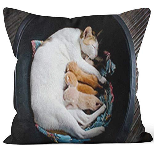 Kitten Nursing Pillows - Cat Nursing Kittens Throw Pillow Cushion