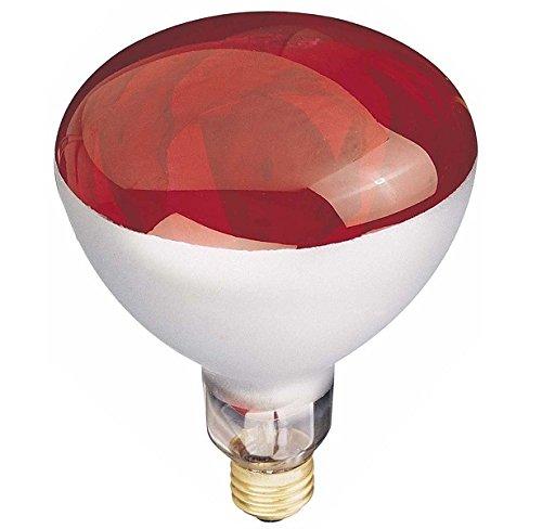 chicken bulb - 7
