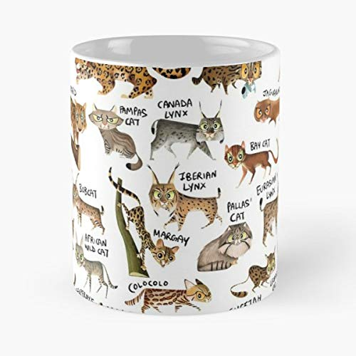 Cats Wild Tiger Lion Puma Jaguar Leopard Snow Cute Funny - Best 11 ...