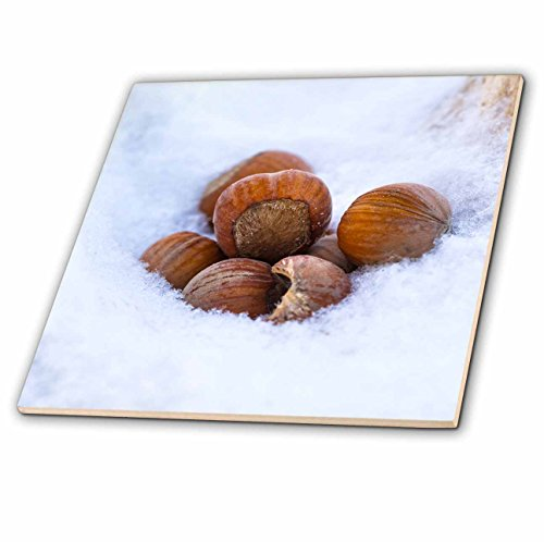 3dRose Alexis Photography - Seasons Winter - Hazel or filbert nuts in a snow. Closeup view - 8 Inch Glass Tile -