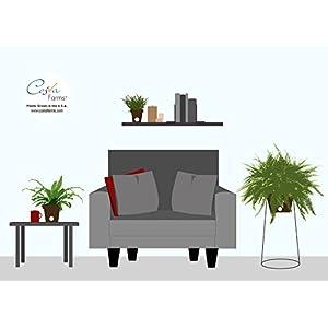 Costa Farms WaterWick Self-Watering Heart Design Planter w/ Premium Exotic Angel Live Indoor Love Fern Plant 4