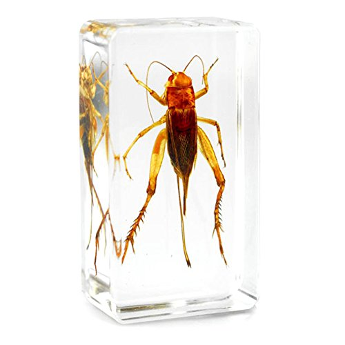QTMY Insect in Resin Specimen Collection Paperweight for Office Desk,Christmas Gift for Men Biology Science Teacher Kids Education (Cricket)