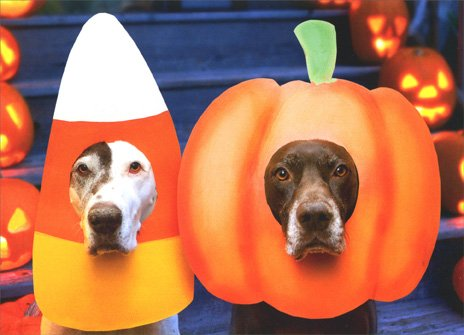 Two Dogs, Pumpkin and Candy Masks Halloween (Christine Halloween Costume)