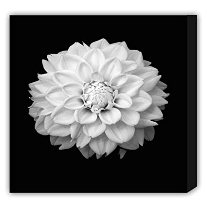 Amazon Black And White Flower Canvas Print 12 X 12 Posters