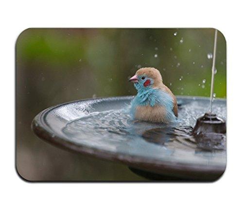 Cecil Beard Bird Blur Fountain Bathroom Kitchen Rug Mat Welcome Door MatPrinted by Cecil Beard