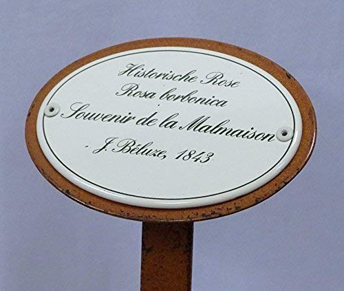 Rosenschild Emaille Historische Rose Souvenir de la Malmaison Beluze 1843
