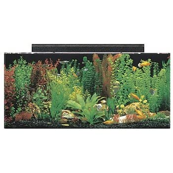 "SeaClear 40 gal Acrylic Aquarium Combo Set, 36 by 15 by 16"", Black"