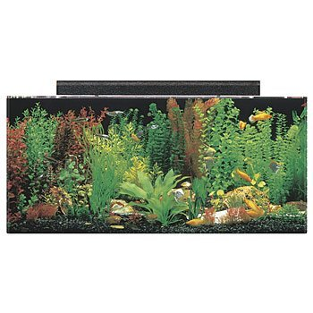 "SeaClear 40 gal Acrylic Aquarium Combo Set, 36 by 15 by 16"", Black from SeaClear"