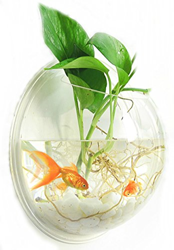 (YoYo Moon Fish Bubble Wall Mounted Acrylic Fish Bowl Fish Tank, Unique Aquarium)