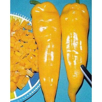 Corno di Toro Giallo Pepper (Rare) Golden-Yellow-Sweet & Spicy!!!!(10 - Seeds) : Garden & Outdoor