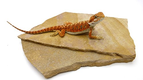 Desert Rock - Carolina Custom Cages Natural Habitat Rocks, Painted Desert (Medium Size Pair)